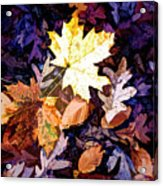 On The Forest Floor Vivid Colors Acrylic Print