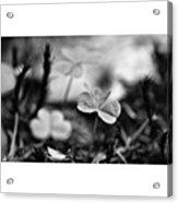 On The Forest Floor  #monochrome Acrylic Print