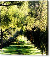 On The Path Acrylic Print