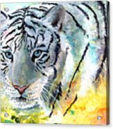 On The Prowl Acrylic Print by Sherry Shipley