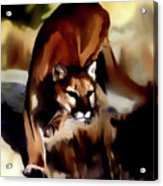 On The Prowl Acrylic Print
