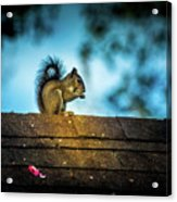 On The Roof Acrylic Print