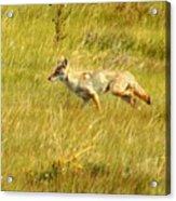On The Run ... Montana Art Photo Acrylic Print