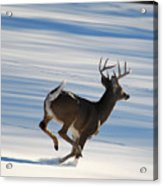 On The Run Acrylic Print by Todd Hostetter