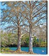 On The San Marcos River Texas Acrylic Print