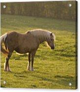 On The Sunny Meadow Acrylic Print