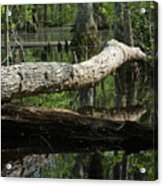 On The Swamp Acrylic Print