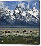 On To Greener Pastures Acrylic Print