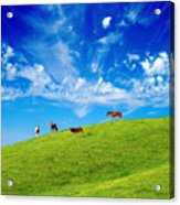On Top Of The Hill Acrylic Print