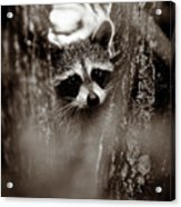 On Watch - Sepia Acrylic Print
