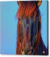 Onaqui Wild Stallion Portrait Acrylic Print