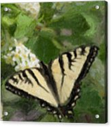 Once There Was A Butterfly Acrylic Print