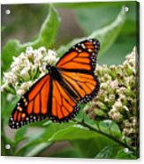Once Upon A Butterfly 001 Acrylic Print