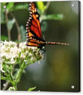 Once Upon A Butterfly 006 Acrylic Print