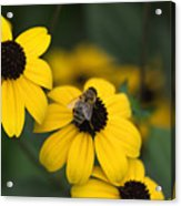 One bee over the flower's nest Acrylic Print