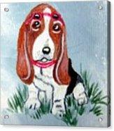One Cool Basset Hound Acrylic Print