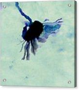 One Daisy - S03c Acrylic Print