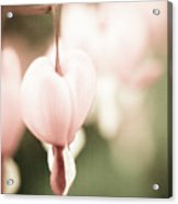 One Heart Acrylic Print