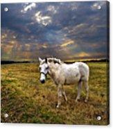 One Horse Acrylic Print