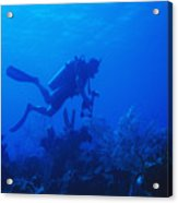 One Man Scuba Diving On Coral Reef Acrylic Print