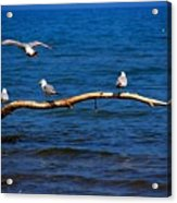 One More Makes Four Acrylic Print