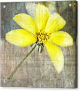 One Must Have Sunshine Freedom And A Little Flower Acrylic Print