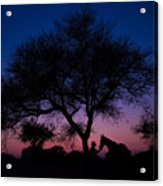 Evening In Rajasthan Acrylic Print