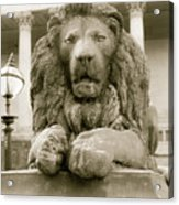One Of Four Lion Statues Outside St George's Hall Liverpool Acrylic Print
