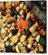 One Orange Leaf Acrylic Print