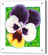 One Pansy For Marti Acrylic Print