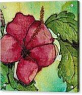 One Pink Hibiscus Acrylic Print