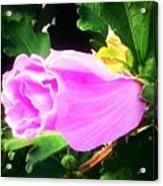 One Pretty Flower Acrylic Print