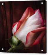 One Red Rose Still Life Acrylic Print
