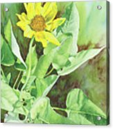 One Rooting In The Sun Acrylic Print