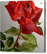 One Single Red Rose Acrylic Print