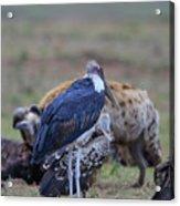 One Stork Acrylic Print