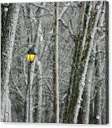 One Strange Tree 1 Acrylic Print