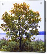 One Tree Hudson River View Acrylic Print