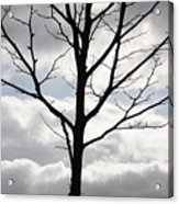 One Winter Tree With Clouds Acrylic Print