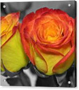 Only Color Acrylic Print