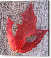 Only One Leaf To Live Acrylic Print