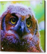 Opalescent Owl Acrylic Print