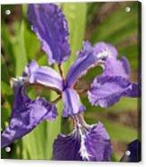 Open Flower Acrylic Print