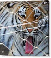 Open Wide Say Ahhhh Acrylic Print