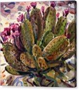 Opuntia Cactus Acrylic Print