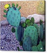 Opuntia Acrylic Print