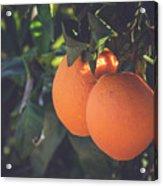 Orange #1 Acrylic Print
