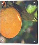 Orange #2 Acrylic Print