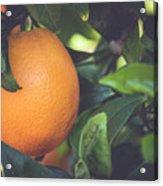 Orange #3 Acrylic Print