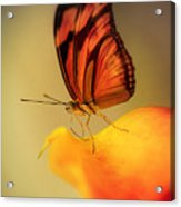 Orange And Black Butterfly Sitting On The Yellow Petal Acrylic Print